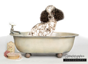 Antique_Tub-dog-portrait1